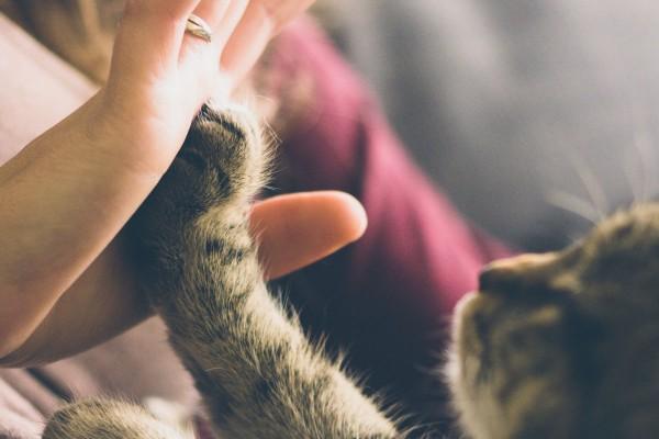 WA-verzekering kat
