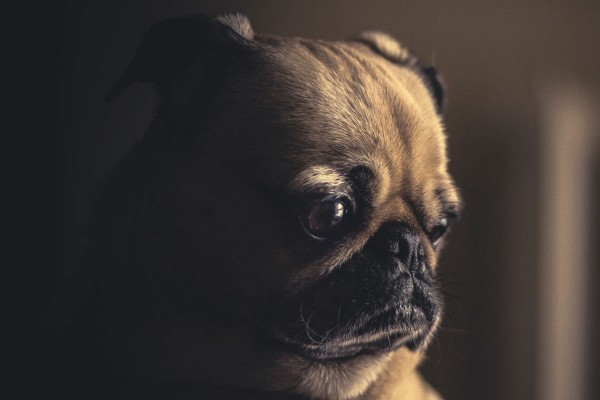 WA-verzekering hond